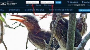 Frost Bank Online Banking Login Guide